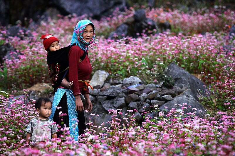 Ha Giang buckwheat flower